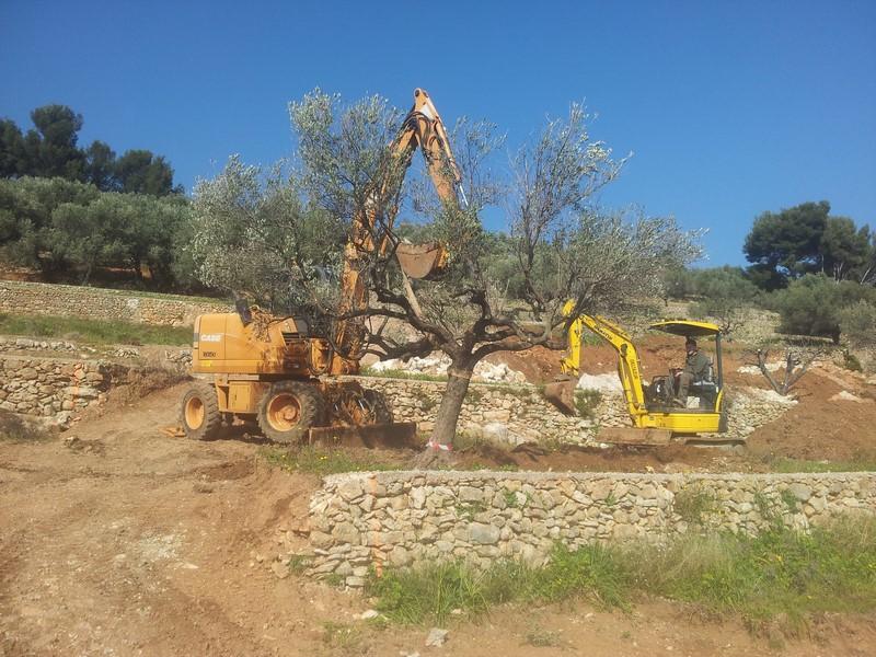 Terrassement pour la construction de 2 maison sur ollioules am nagements paysagers et vente de - Traitement olivier bouillie bordelaise ...